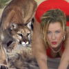 https://www.defymaturity.com/observing-the-untamed-new-american-cougar